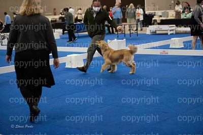 pups (236 of 534)