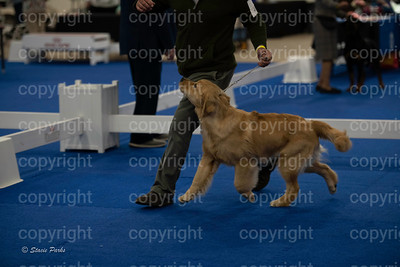 pups (181 of 534)