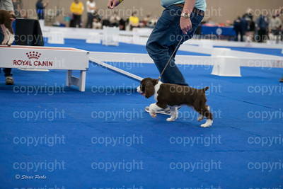 pups2 (149 of 783)