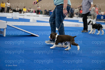 pups2 (148 of 783)