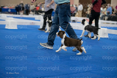 pups2 (144 of 783)