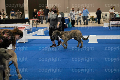 pups (242 of 534)
