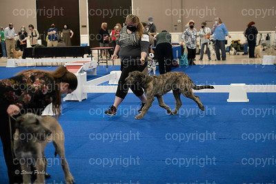pups (243 of 534)