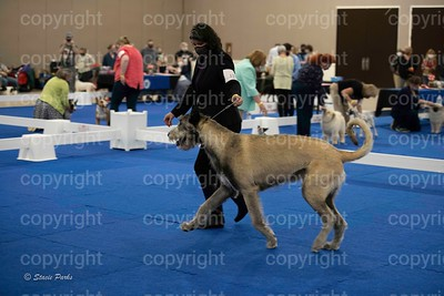pups (270 of 534)