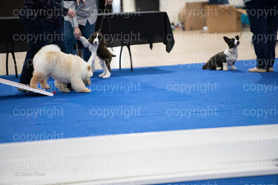 pups4 (152 of 435)