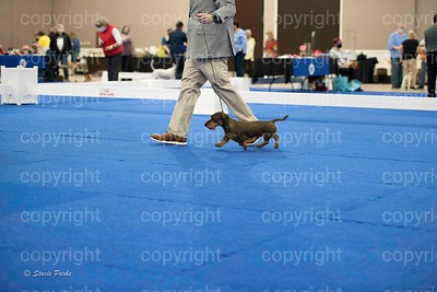 pups (487 of 534)