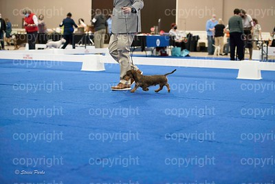 pups (485 of 534)