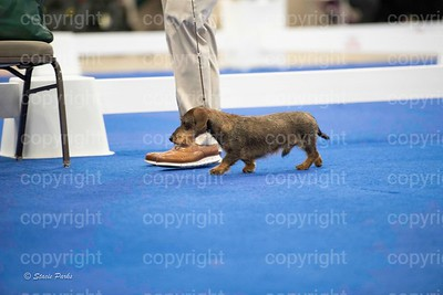 pups (498 of 534)