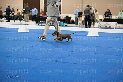 pups (483 of 534)