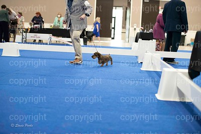pups (479 of 534)