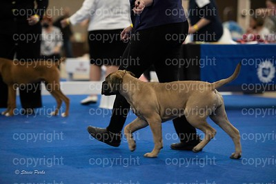 pups (351 of 534)