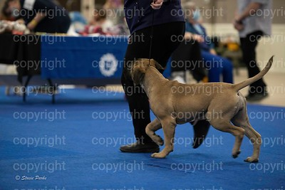 pups (348 of 534)