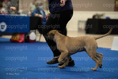 pups (346 of 534)