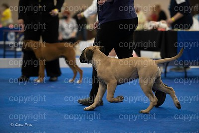 pups (352 of 534)