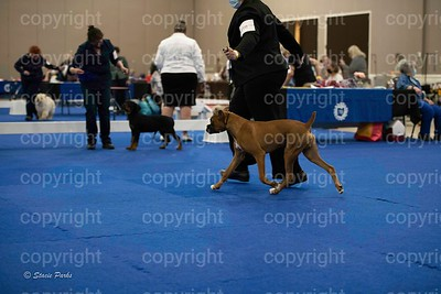 pups (342 of 534)