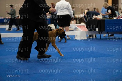 pups (337 of 534)