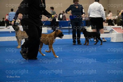 pups (334 of 534)