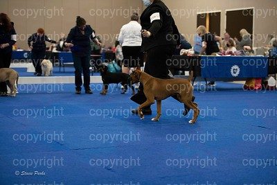 pups (343 of 534)