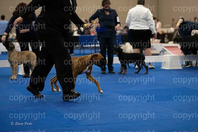 pups (335 of 534)