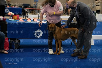 pups (373 of 534)