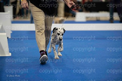 pups (296 of 534)