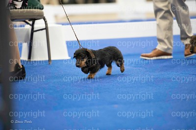 pups (496 of 534)