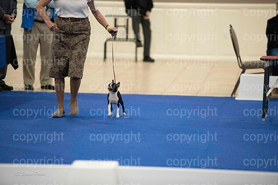 pups4 (417 of 435)