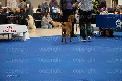 pups (514 of 534)
