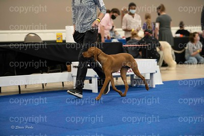 pups (516 of 534)