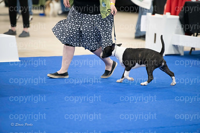 pups2 (170 of 783)