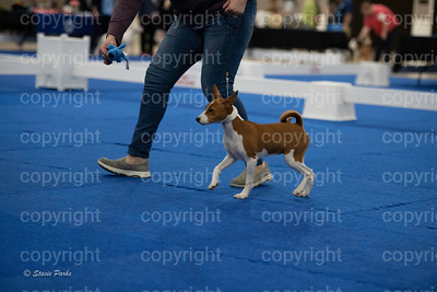 pups2 (157 of 783)