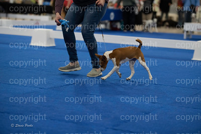 pups2 (154 of 783)