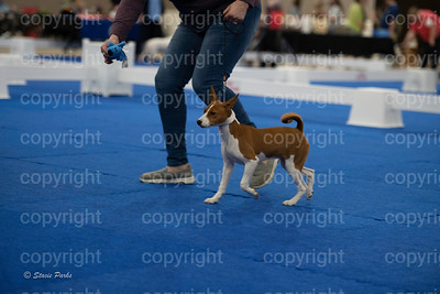 pups2 (158 of 783)