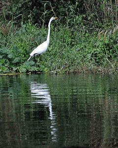 St_Johns_River_12302011-043