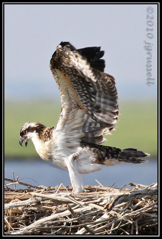 """Nestling """"wingercising"""""""