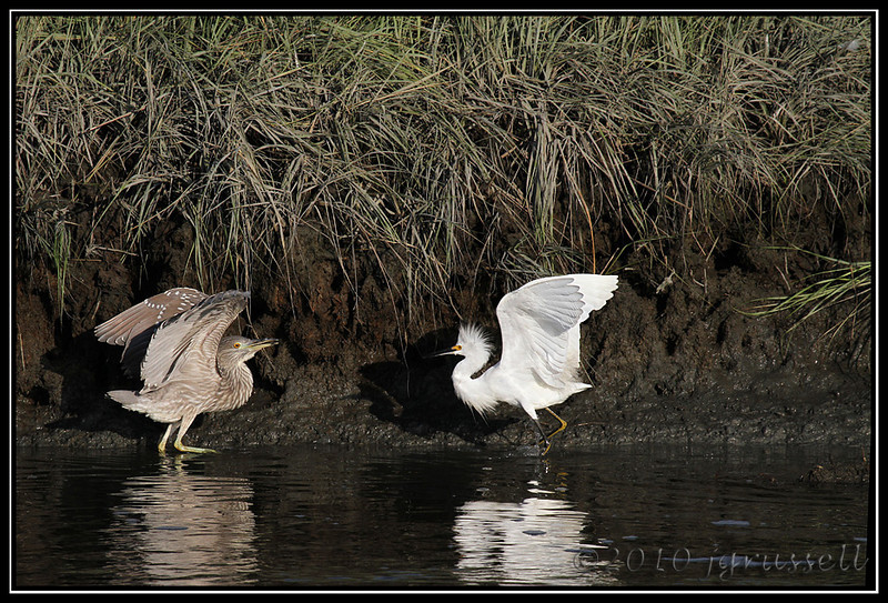 """Heron: """"Don't make me come over there"""""""