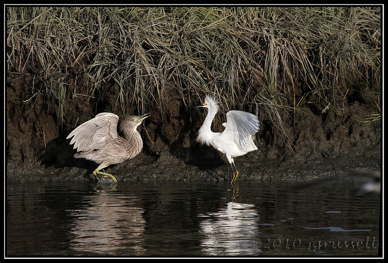 """Heron: """"I said..."""" <br /> Snowy: """"I don't CARE what you said..."""""""