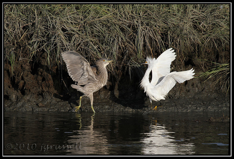"""Heron: """"You asked for it!"""" <br /> Snowy: """"Ulp..."""""""