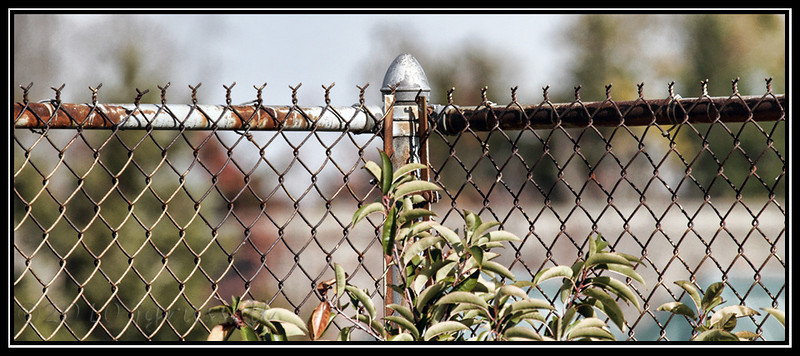 Fence near Building 124