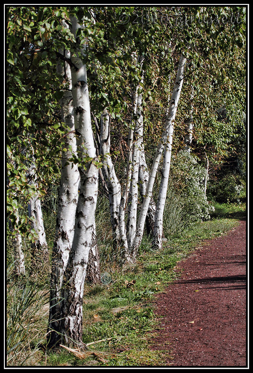 The path at Mill Creek Marsh