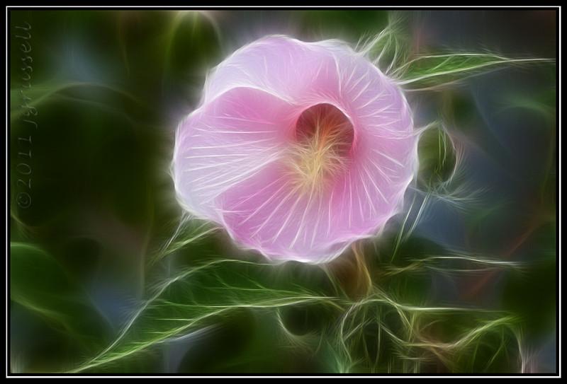 Fractilius bloom