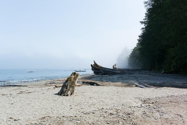Dead trees on the beach