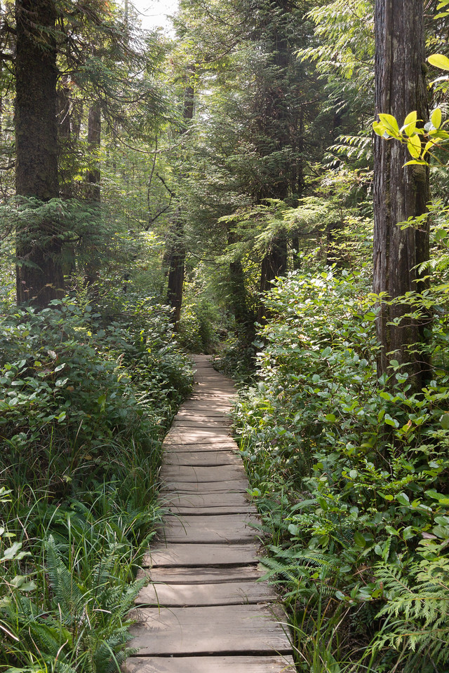 Cape Flattery trail #3