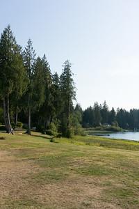 Quinault Lake shore