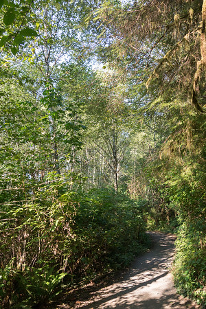 Path to largest spruce tree