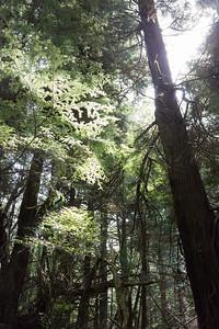 Cape Flattery trail #6