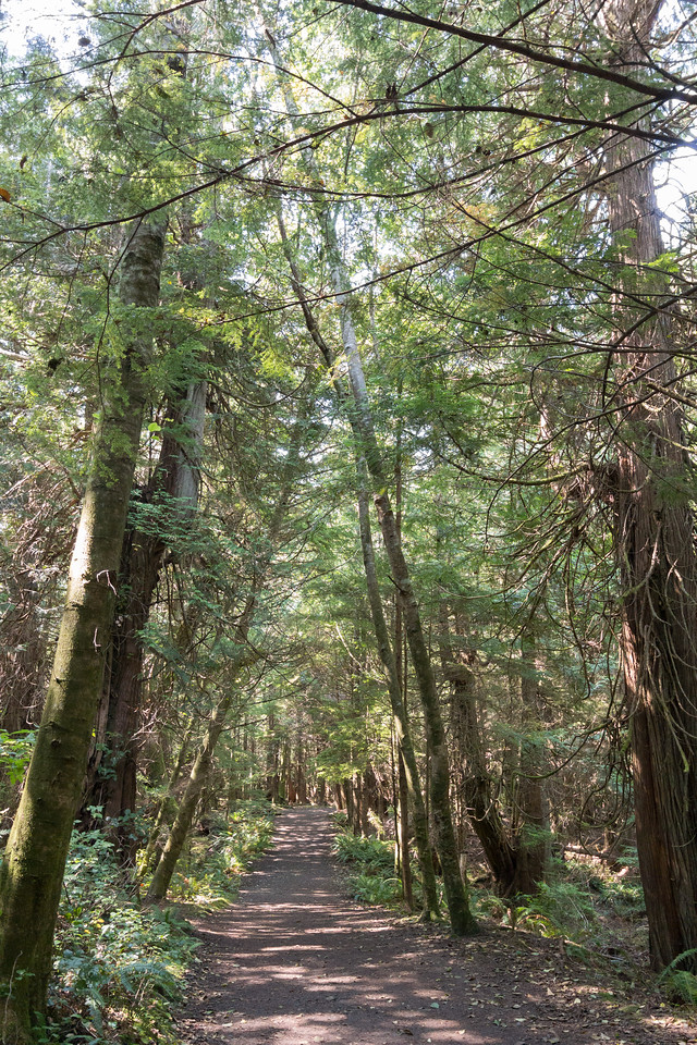 Cape Flattery trail #1