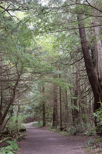 Cape Flattery trail #5