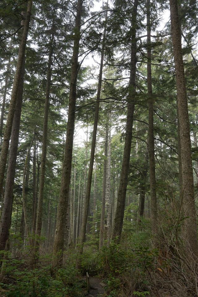 Cape Flattery trail #4