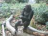 Coole Pose, Frau Gorilla